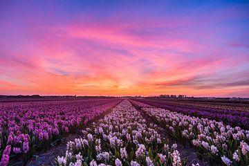 Zonsondergang over de bollenvelden van Marcel van den Bos