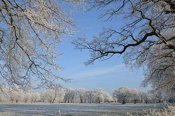 Bomen van Corinna Vollertsen