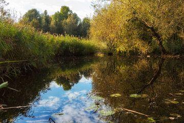 Herbstlicher Teich von De Dwarsgouw von Jan van der Knaap