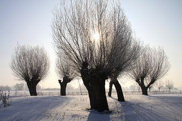 Kopfweiden im Winterkleid von Karina Baumgart