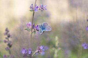 Blau in Lila von Antoine Deleij
