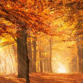 Het gouden licht van een bos in de herfst van iPics Photography