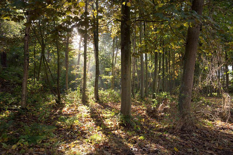 Le soleil à travers les arbres sur Sander de Jong