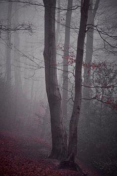 Parkbos Genbroek im Nebel von Wilfried Roovers