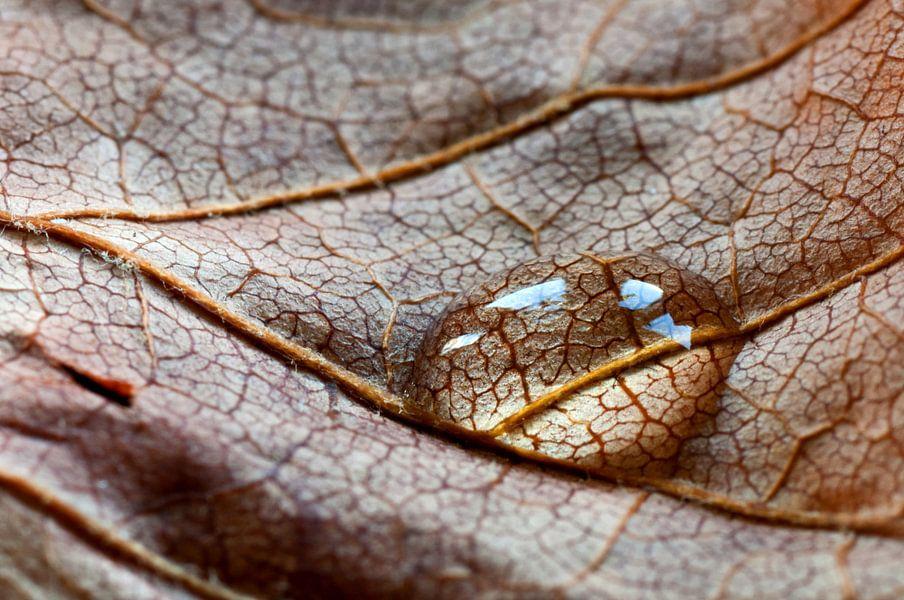 Druppel blad
