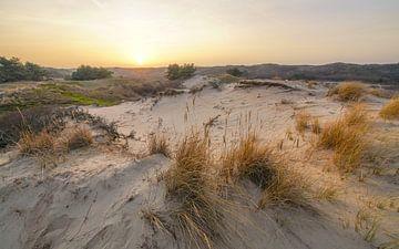 Holländischer Strand und Dünen von Dirk van Egmond
