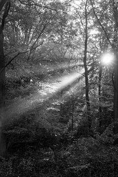 Forest Rays van Koen Boelrijk Photography