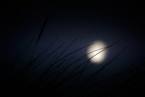 zwaaiend naar de maan