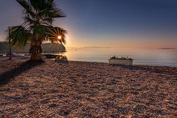 Zonnester door de palmboom op het stenen strand van Christian Klös