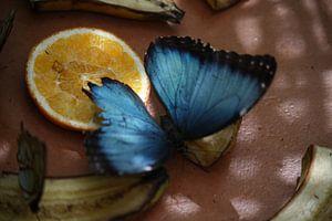 Blauwe Vlinder van Willemijn van Donkelaar