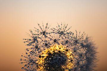 Tau, Flusen und Sonnenaufgang von Tania Perneel