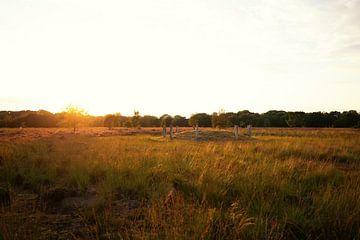 Zonsondergang op de heide van Maikel Brands