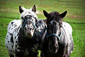 Drie paarden, drie vrienden