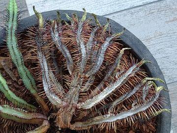 Kamerplant: SciFi Cactus 2-3 van MoArt (Maurice Heuts)