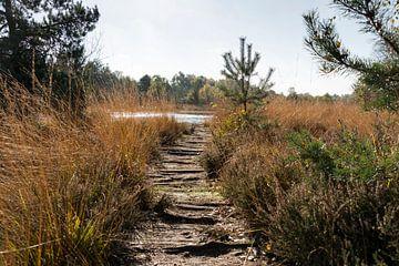 walking track at gilderhauser venn  von Compuinfoto .