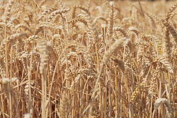 Graanveld in de zomer van Sjoerd van der Wal