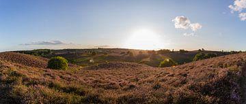 Zonsondergang boven de paarse heide op de Posbank von Stefan van der Wijst