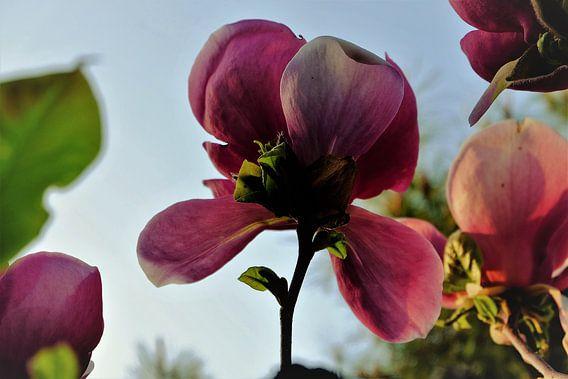 Bloem aan de Tulpenboom 2.2 van Marian Klerx