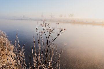 Zacht licht & winter in het polderlandschap van Susanne Ottenheym