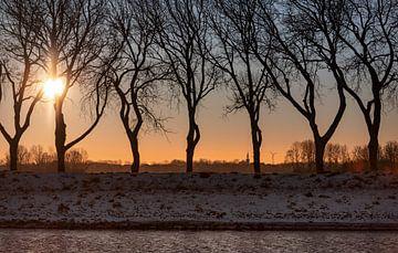 Winterse zonsopkomst tussen de bomen van Percy's fotografie