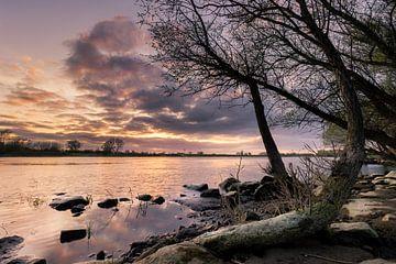 Een kromme bananen boom tijdens de zonsondergang aan de ijssel van Jaimy Leemburg Photography