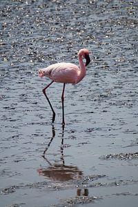 De Flamingo van Erna Haarsma-Hoogterp