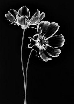 Schwarzer Kosmos von Christl Deckx