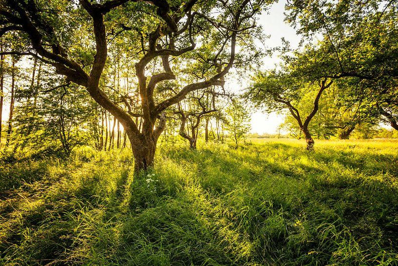 Groen als gras van Martijn van Dellen