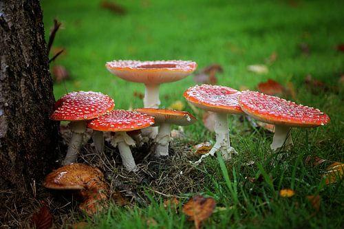 op een rode paddenstoel..  van