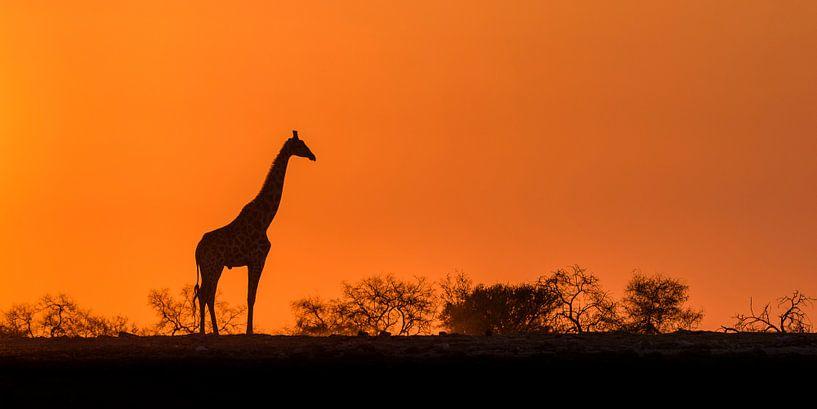 African sunrise von Richard Guijt