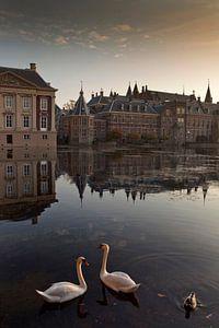 zwanen in de Hofvijver van Den Haag van