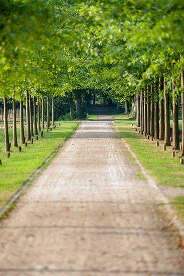 Park laan met groene bomen op landgoed