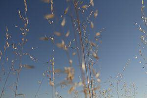 Gras op een zomerse dag