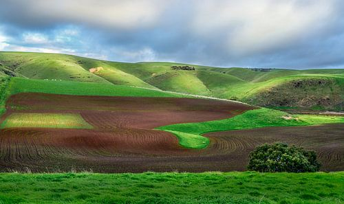 Green Hills and Red Earth van