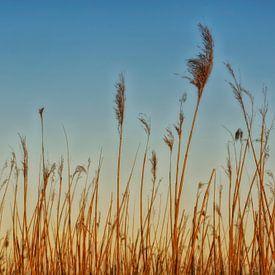 Reet Gras von Claudia Moeckel