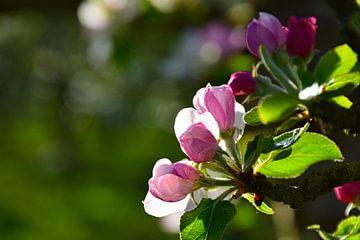 Apfelblüte von Ingrid de Vos - Boom