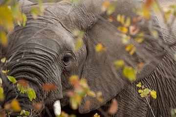 transparenter Elefant von gj heinhuis