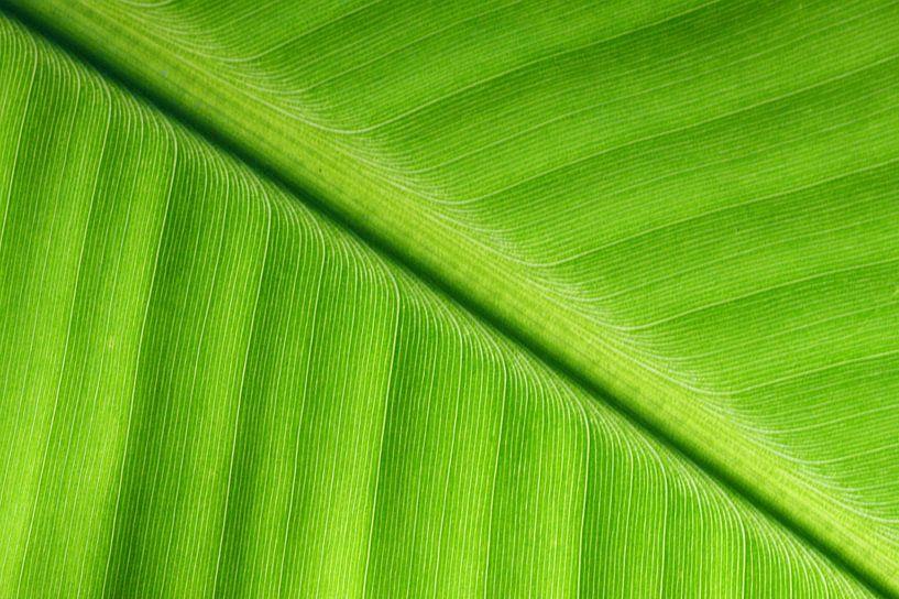 Leaf van Human- pictures