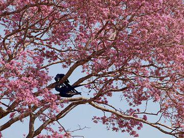 Blauwe papegaaien in roze boom von Roos Vogelzang