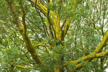 Zonlicht, mos en takken in een boom