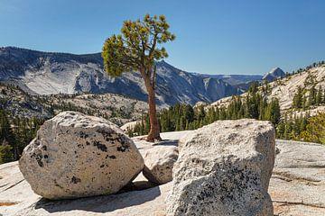 Uitzicht van Olmsted Point naar Half Dome, Yosemite National Park, Californië, Verenigde Staten, USA van Markus Lange