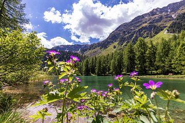 Bergsee Palpuognasee in der Schweiz von Werner Dieterich