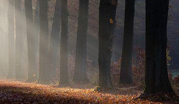 Landgoed Slangenburg, Doetinchem van Natuurlijk Achterhoek