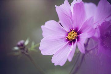 wilde bloem van Kristof Ven