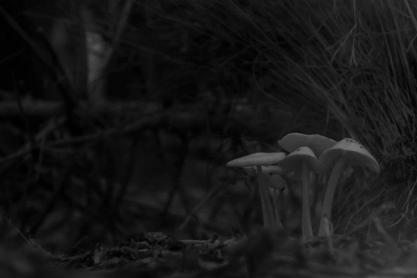 Paddestoelen in duistere omgeving van arjan doornbos