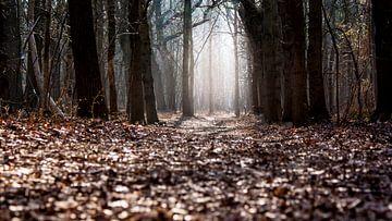 Licht in het bos van