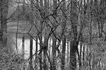 Verdronken bos 1 von Marco van de Pol
