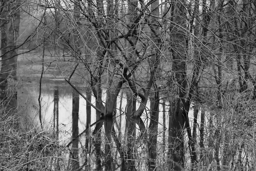 Verdronken bos 1 van Marco van de Pol