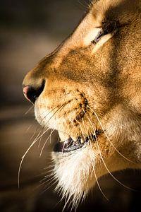 Leeuwin close-up van