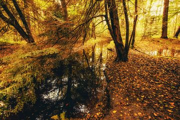 Autumnmood | Hof Espelo (2) van
